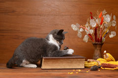 Free Cat Playing With A Plush Mouse Royalty Free Stock Photos - 37151608