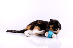 Cat Playing With A Wool Stock Photography