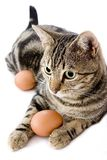 Cat Playing With Egg Royalty Free Stock Photo
