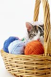 Cat playing with yarn Royalty Free Stock Image