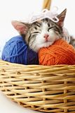 Cat playing with yarn stock images