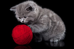 Cat plays with a ball of yarn stock photos