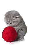 Cat plays with a ball of yarn Stock Photography
