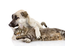 The cat plays with a dog. Stock Photography