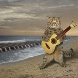 Cat plays the guitar on the beach royalty free stock photography