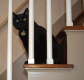 Cat Plays Peek negra Boo Through la barandilla Imagenes de archivo