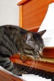 Cat plays piano Stock Photos