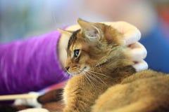 Cat. Pleasure royalty free stock image