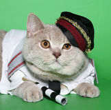 Cat the policeman. The British cat in a suit of the policeman stock photo
