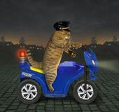 Cat policeman on a motorbike 2. The cat policeman in a cap is riding a motorbike at night stock image