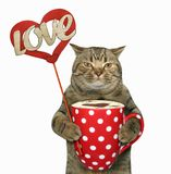 Cat with a polka dot cup Stock Photos