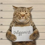 Cat is polygamist. Stock Images