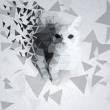 Cat of the polygons on the chaotic background Royalty Free Stock Images