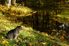 Cat and pond Royalty Free Stock Photography