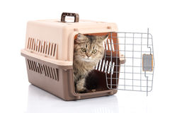Cat ponibcctyc vk pet carrier isolated on white background Royalty Free Stock Images