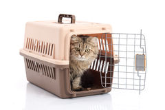 Cat ponibcctyc vk pet carrier isolated on white background Royalty Free Stock Photo
