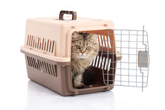 Cat ponibcctyc vk pet carrier isolated on white background Stock Photography
