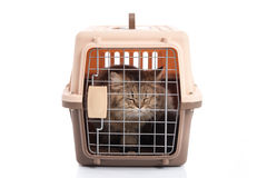 Cat ponibcctyc vk pet carrier isolated on white background Royalty Free Stock Photography