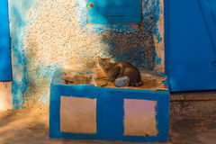 Cat on a porch in Sidi Ifni, Morocco Royalty Free Stock Images