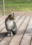 Cat on a porch. A cat sitting on a porch Royalty Free Stock Photo