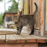 Cat on the porch of a village house. Nature. Stock Image
