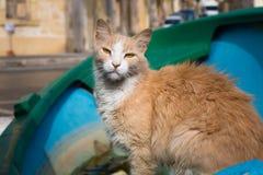Cat from the port of Marsaxlokk Royalty Free Stock Image