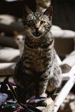 Cat. Portite by Nikon Royalty Free Stock Photos
