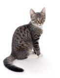 Cat portrait Stock Image