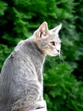 Cat portrait. Nice little cat in nature stock image