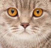 Cat portrait Royalty Free Stock Images