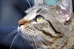 Cat portrait. Portrait of a striped cat looking into the sun Stock Photo