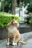 Cat portrait. A orange domestic cat portrait Royalty Free Stock Image