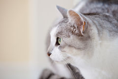 Cat portrait. Beautiful cat sideview and closeup portrait Stock Photos