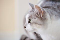 Cat portrait Stock Photos