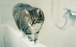 Cat Portrait Royalty Free Stock Photos