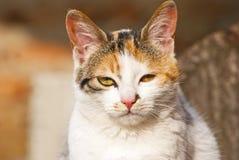 Cat portrait. Beautiful portrait of a sweet cat Royalty Free Stock Images