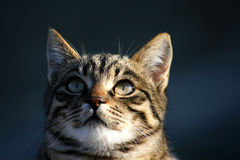 Cat Portrait. Head-shot of a stray cat taken in the Danube Delta Royalty Free Stock Photography