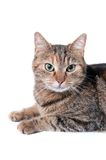 Cat portrait Stock Images