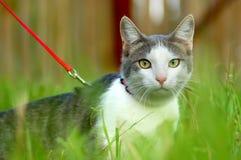 Cat portrait. A beautiful cat posing outside Stock Photos