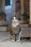 Cat portrait. With columns background Stock Image