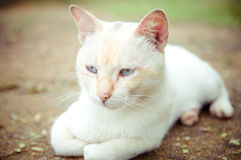 Cat portrait. White cat sit on ground Stock Photo