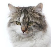 Cat portrait Stock Photo