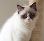 Cat Portrait Royalty-vrije Stock Fotografie