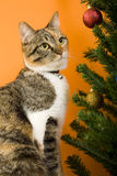 Cat portrait. Cat on an orange background Royalty Free Stock Photo