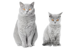 Cat portrait. Young and old cat together Stock Photo