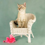 Cat portrait royalty free stock photo