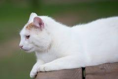 Cat portrait, cat interests Stock Photo