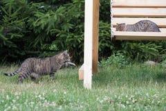 Cat portrait, cat interests Stock Images