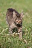 Cat portrait, cat interests Stock Photography
