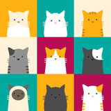 Cat portrait. Portrait of cats with colorful background Royalty Free Stock Image